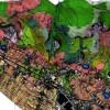 PSR 2014/2020 Misura 16.8. Contributo a fondo perduto fino al 100% per il supporto per l'elaborazione di piani di gestione forestale